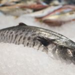 pescados_rodolfo