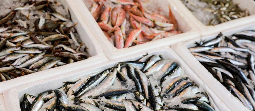 Pescados y mariscos Rodolfo