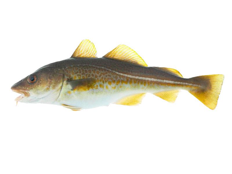 Bacalao en Pescados Rodolfo