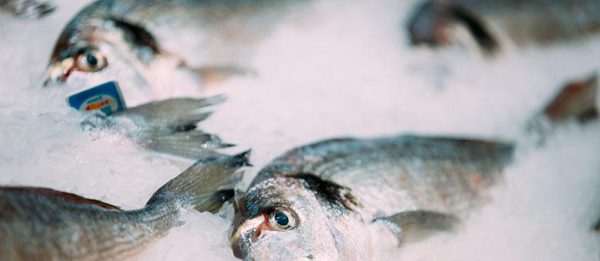 Pescados Rodolfo Pasaia