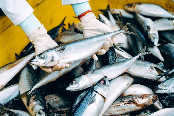 Comercialización de pescado en Gipuzkoa