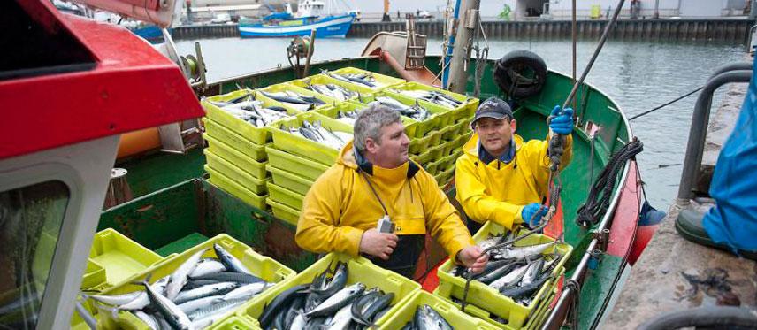 Empresa Mayoristas Pescado en Gipuzkoa