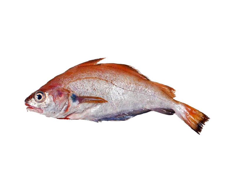 Faneca en Pescados Rodolfo