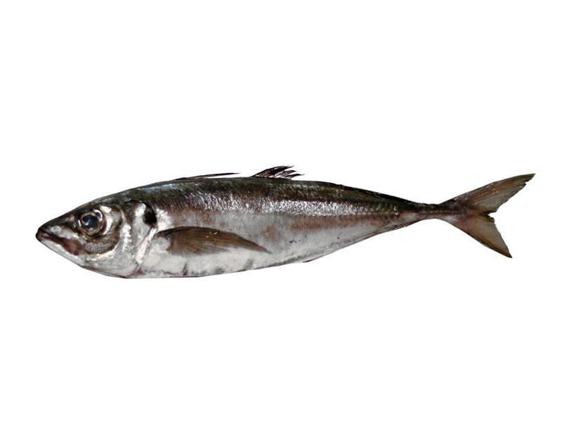 Jurel Negro en Pescados Rodolfo