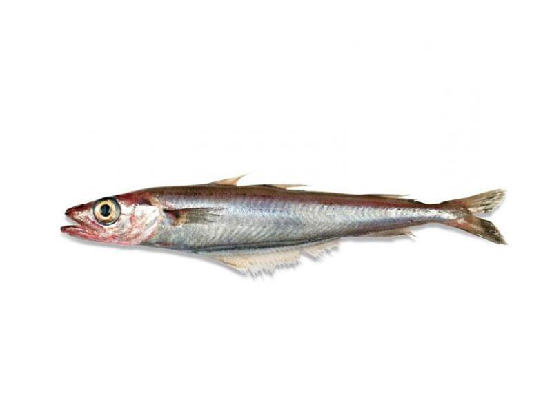 Lirio en Pescados Rodolfo