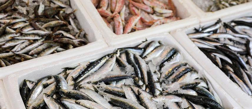 Proveedor de pescados en Gipuzkoa