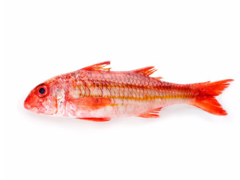 Salmonete en Pescados Rodolfo
