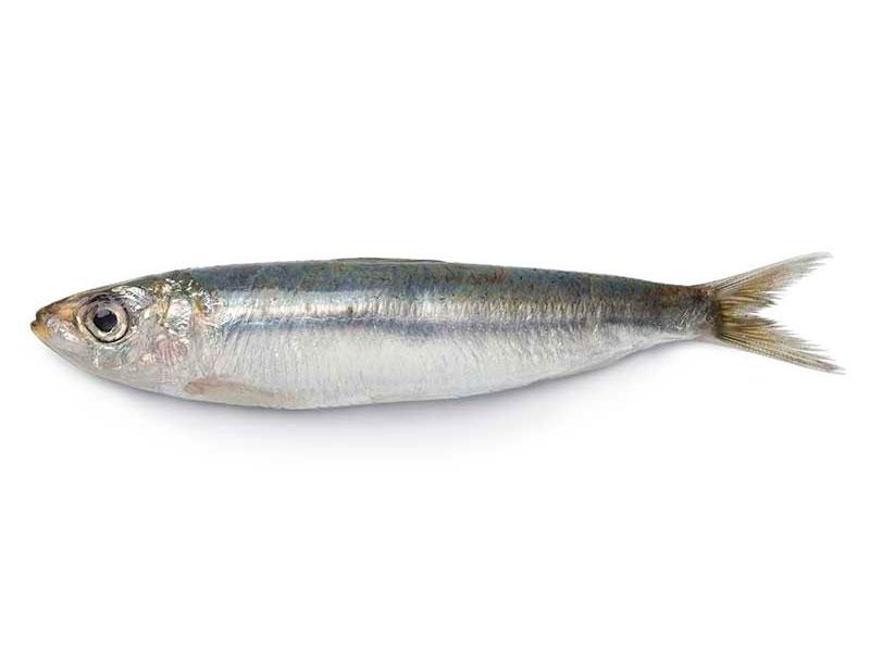 Sardina Pescados Rodolfo