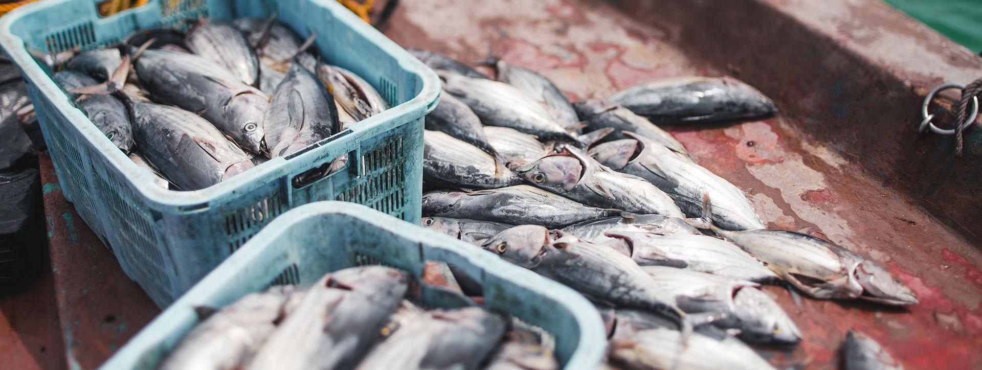 Proveedores de pescado